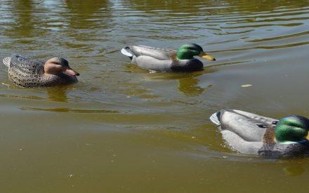 best motion duck decoys