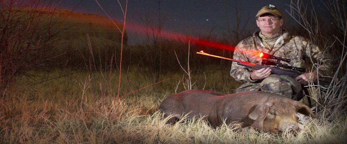 best hog hunting light