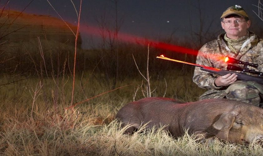 best hog hunting light