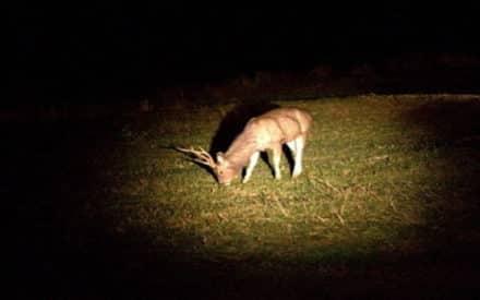 Best Spotlight for Deer