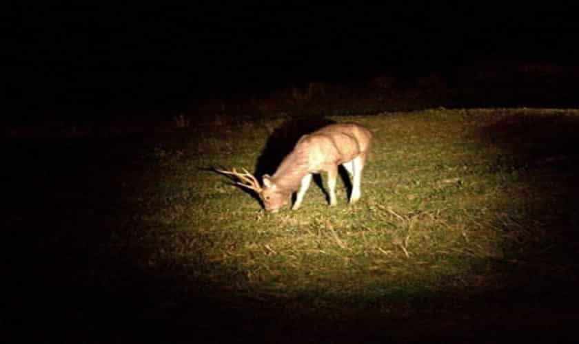 Best Spotlight for Deer