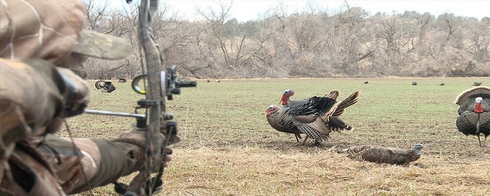 Tips for Bow Hunting Turkey