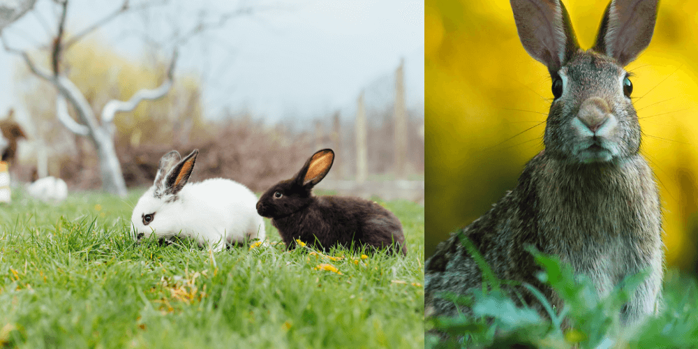 https://www.best4review.com/wp-content/uploads/2020/12/How-to-Keep-Rabbits-Out-of-Garden.png
