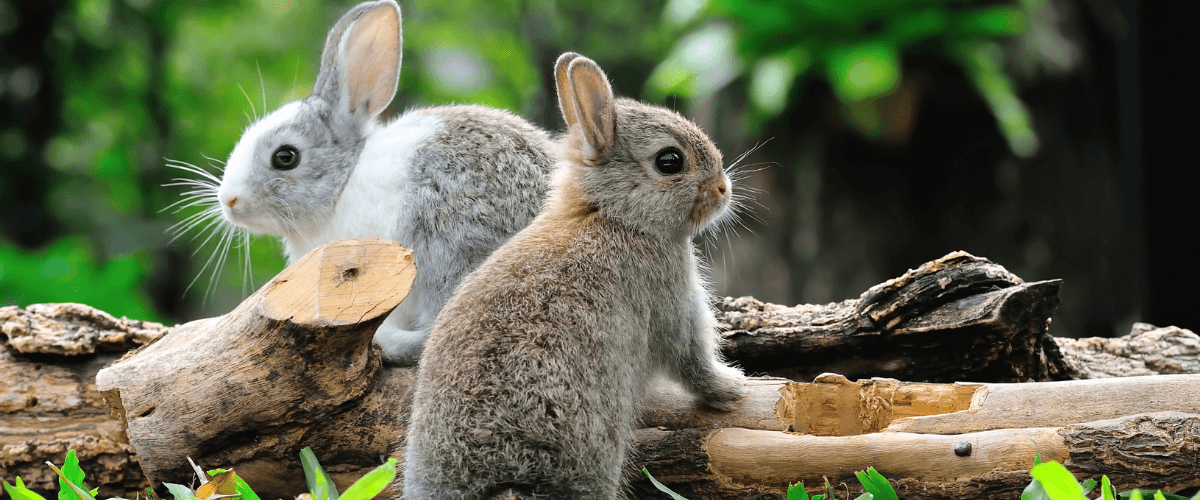 https://www.best4review.com/wp-content/uploads/2020/12/Keep-Rabbits-Out-of-Garden.png